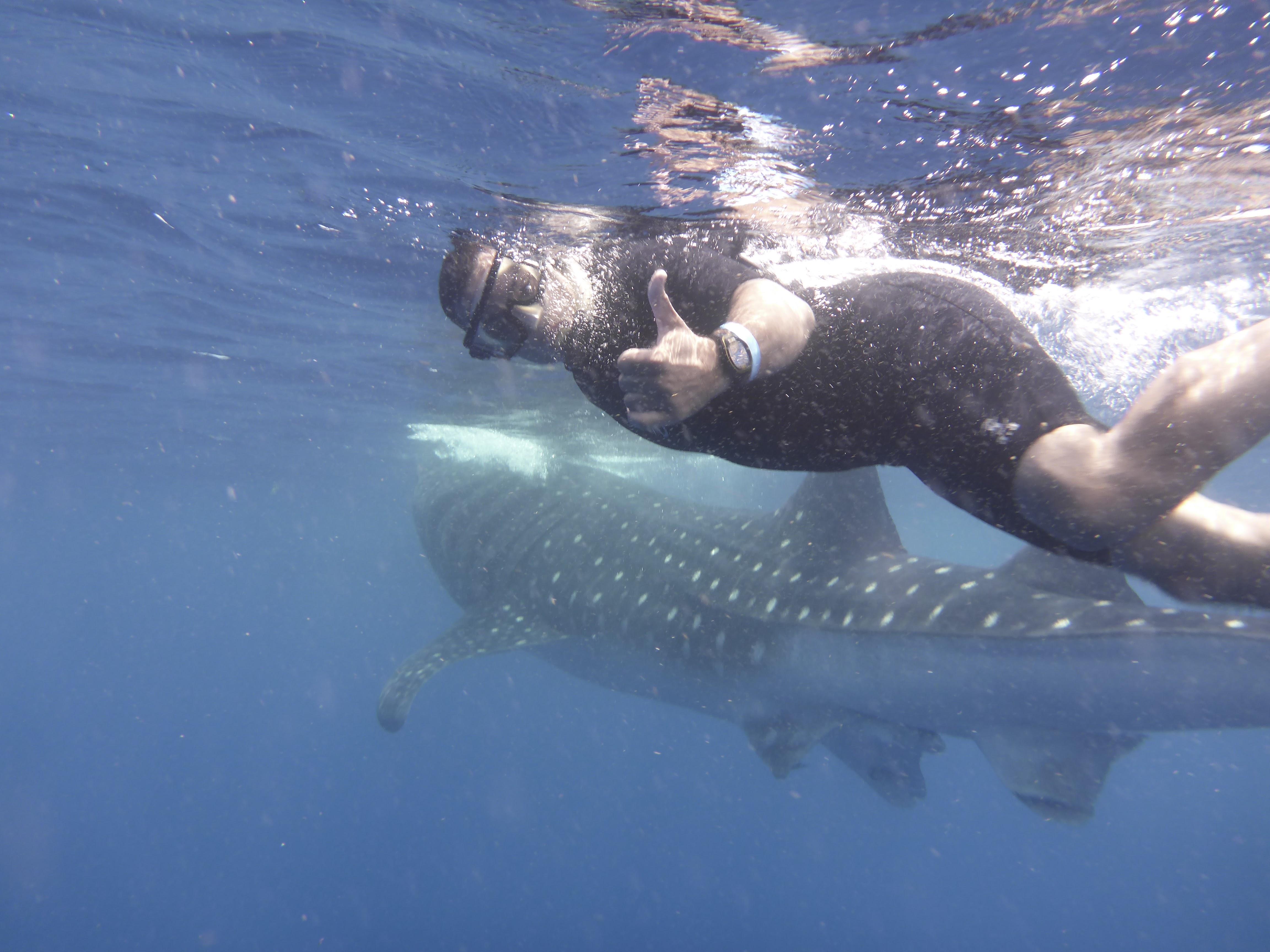 1_joe_whale_shark